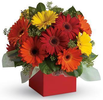 Image of Glorious Gerberas - Flower Arrangement